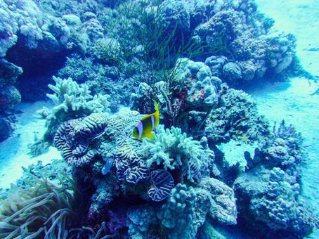 Coral reefs and anemone fish