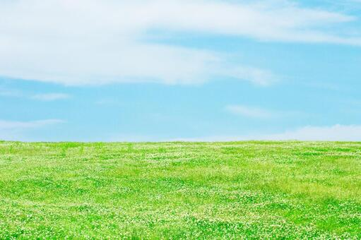 Grassland with blue sky and clover _ 6