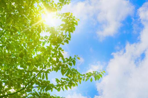 Fresh green cherry tree, blue sky and light