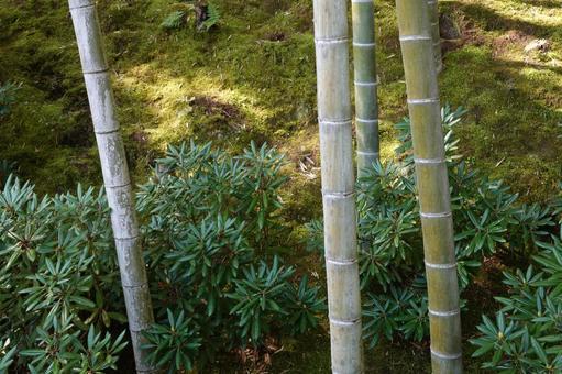 竹のある風景