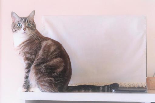 복사 공간이있는 귀여운 호랑이 고양이 바탕 화면 프레임 문자 공간