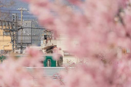 교토 부 【요도 도관 카와 벚꽃과 기차]