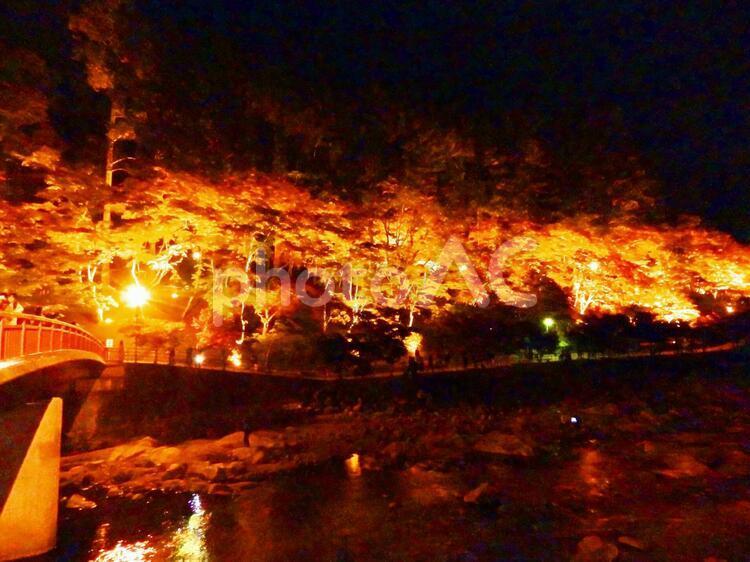 橋と紅葉ライトアップの写真