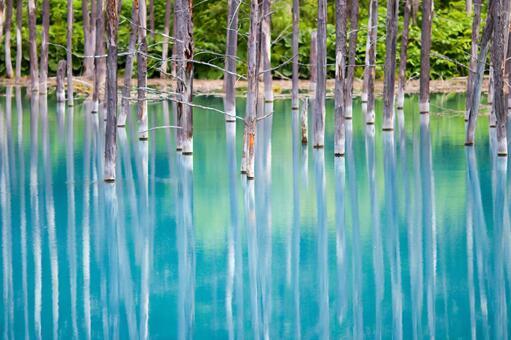 Blue Pond Biei