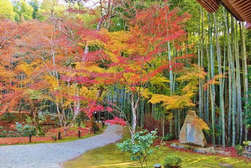 Autumn leaves of Enkoji Temple in Kyoto