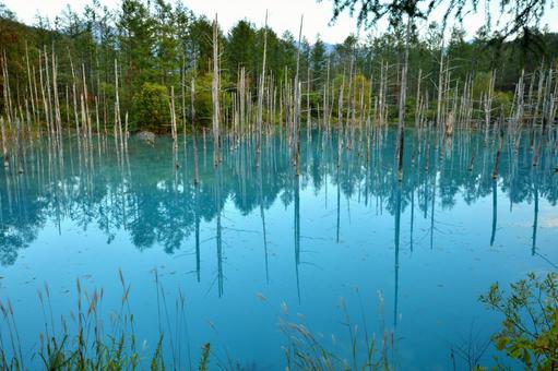 비 에이 푸른 연못