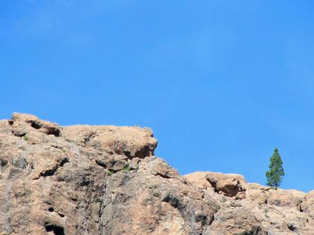 [외국] 푸른 하늘 1 그루의 나무 침엽수 산 카나리아 제도 하이킹 하늘 자연 식물 풍경 경치