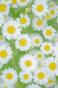 Fantastic flowers 20