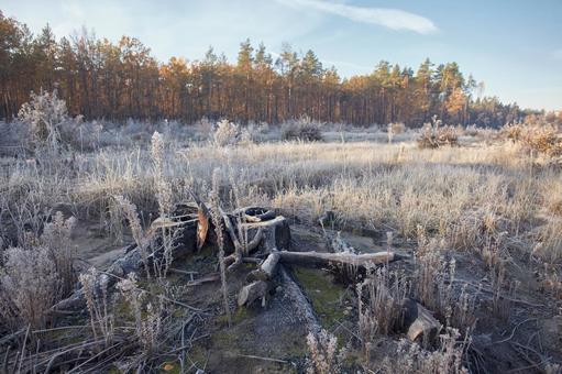 Forest ground 13