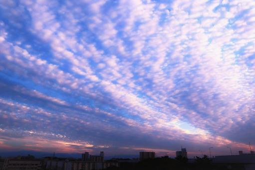 Beautiful cirrocumulus illuminated by the setting sun over the sky