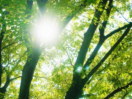 햇살과 햇빛