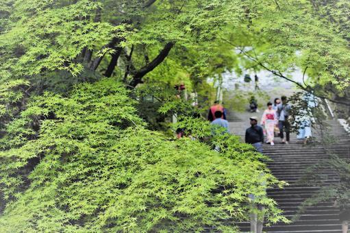 Take a walk in Kyoto Arashiyama