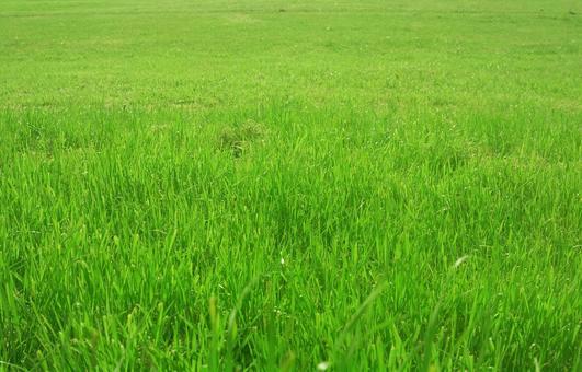 Lawn_background_77