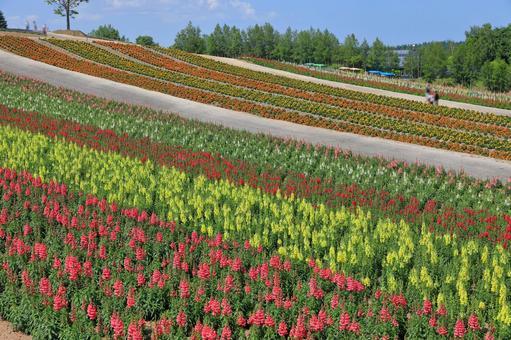 사계 채의 언덕 금붕어 잔디 등 화려한 꽃밭