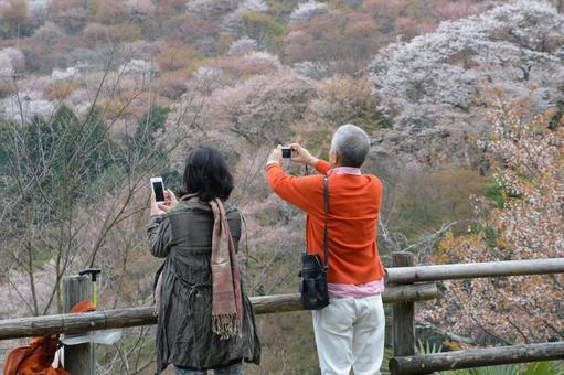 Sakura old man behind you