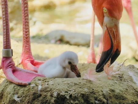Flamingo parenting