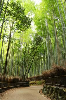 Small diameter of bamboo grove
