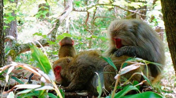 猴子修飾和看著它的猴子