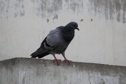 Pakistan Bird 20