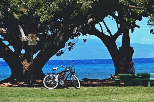 Local Hawaiian shade of shade