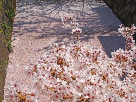 Waterways and cherry blossoms