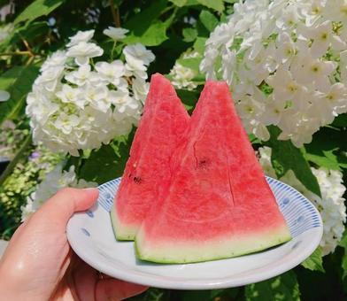 카시와바아지사이와 수박