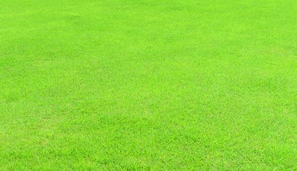 Beautiful lawn in the texture park
