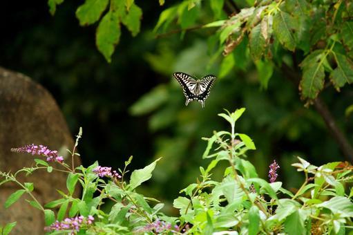 날고있는 호랑 나비