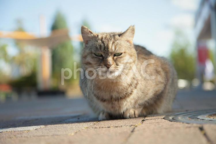 日向ぼっこをする猫1の写真