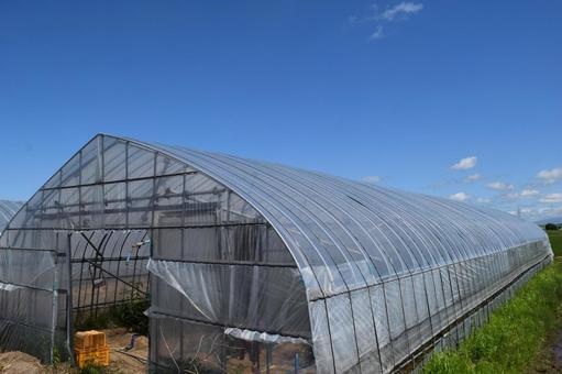 Greenhouse greenhouse cultivation