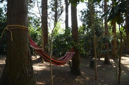 Hammock in the cedar