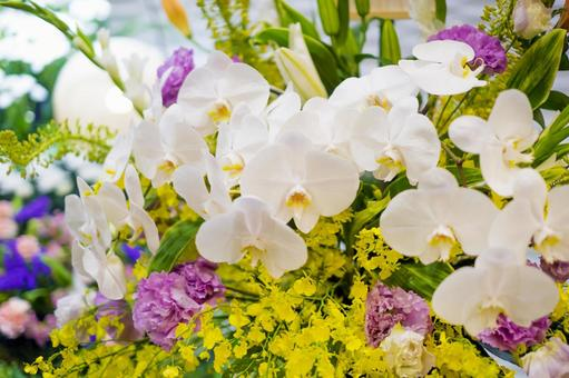 A bouquet of Phalaenopsis orchids