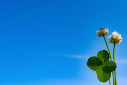 Sky and four-leaf clover background