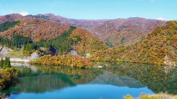 쇼가와 협곡의 단풍