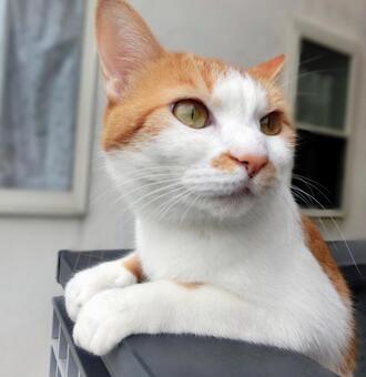 Cute pleasant cat