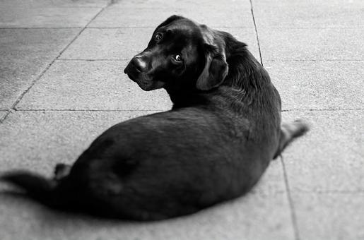 Black dog lying on the road