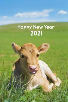 New Year's card of the year of the ox_Mongolian calf_2021
