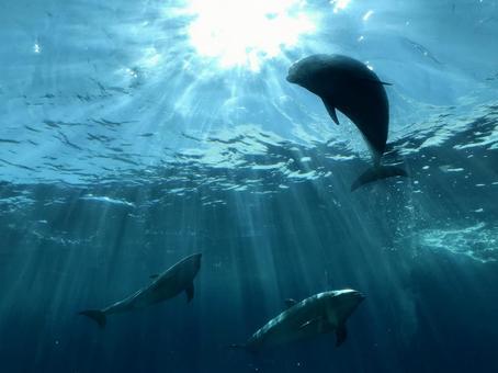 3 dolphins swimming in the aquarium