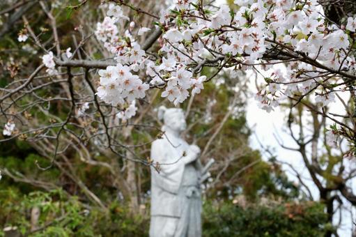 원 성터의 벚꽃