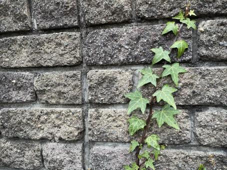 벽을 타고 흐르는 식물