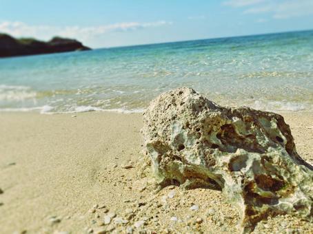 백골 화 한 산호와 에메랄드 그린의 바다