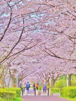 Sakura Sakura Sakura Tunnel Sakura no Tonneru