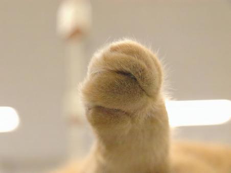 Cat's hand
