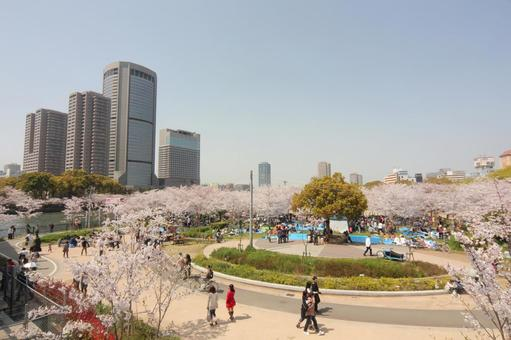 Cherry blossoms and OAP of Sakuranomiya Park