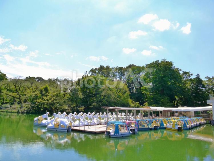 井の頭池のスワンボート(井の頭恩賜公園)3の写真