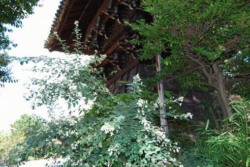 西大寺白萩和鐘樓