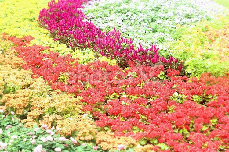 カラフルな花の写真
