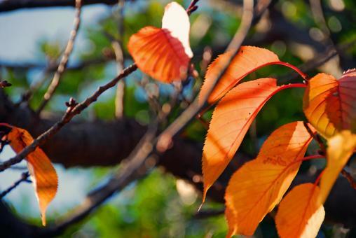 벚꽃 잎이 떨어질 때!