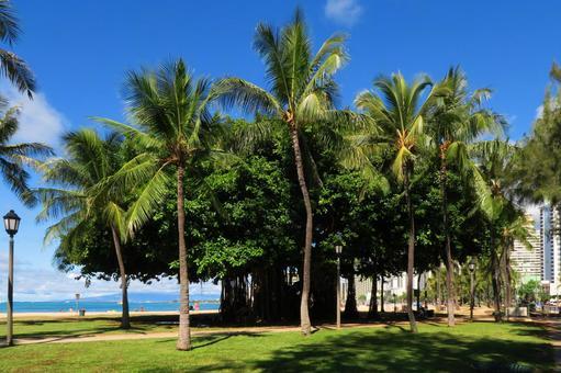 Hawaiian landscape (100)