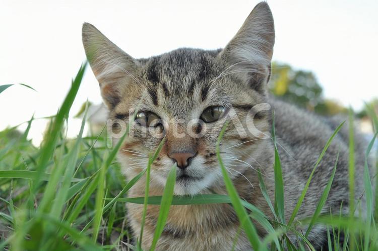 クロアチアの猫3の写真